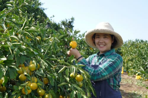 Mrs Mizumoto, posing with a tree loaded with fruit