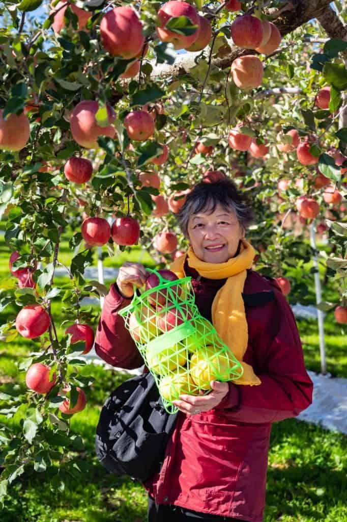 Picking a bag of Nagano apples to take home