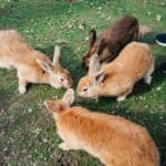 Rabbit Island: The Cutest Day Trip from Hiroshima on a Budget