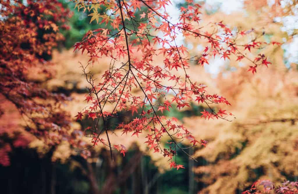 Fall colors in Nagasaki Prefecture.