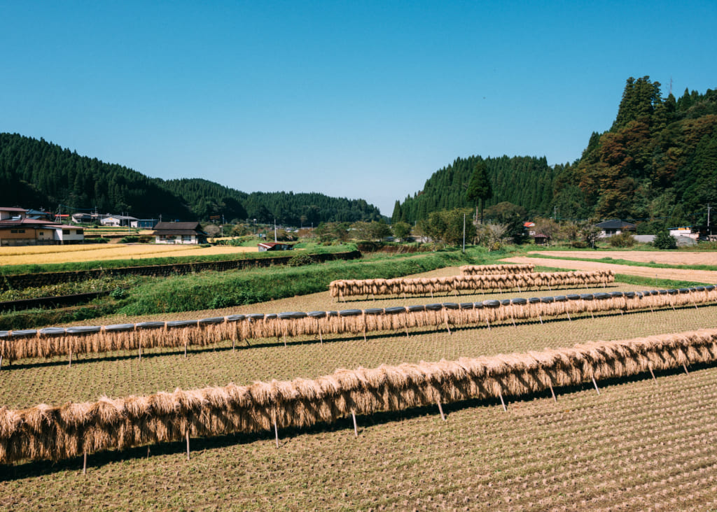 Champs tout juste moissonné à Minami-Oguni , Kumamoto