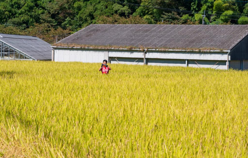Le guide en tenue de vélo rouge au milieu d'une rizière dorée
