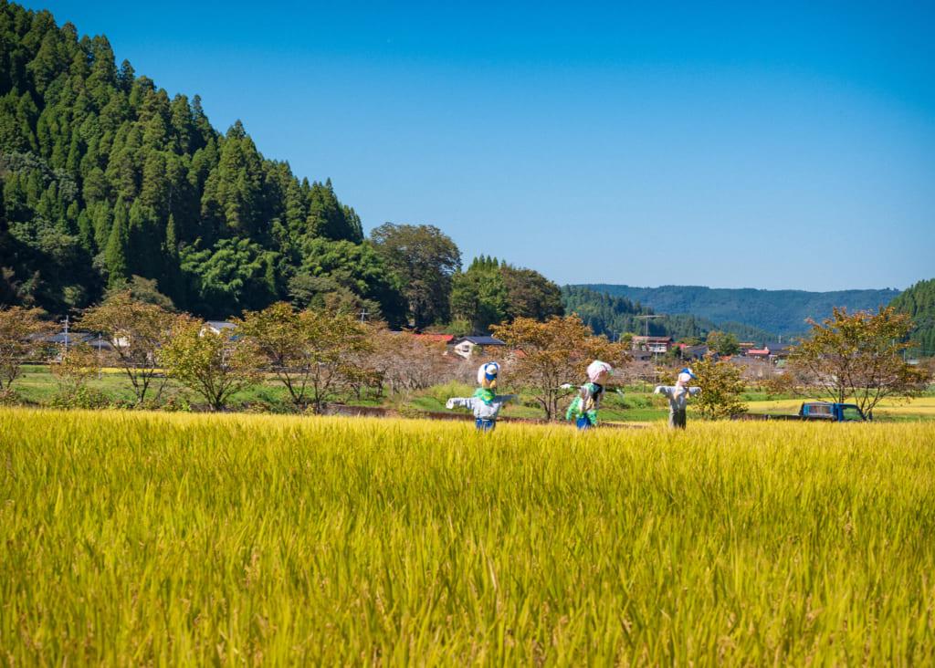 Épouvantails dans une rizière dorée dans le nord de Kumamoto