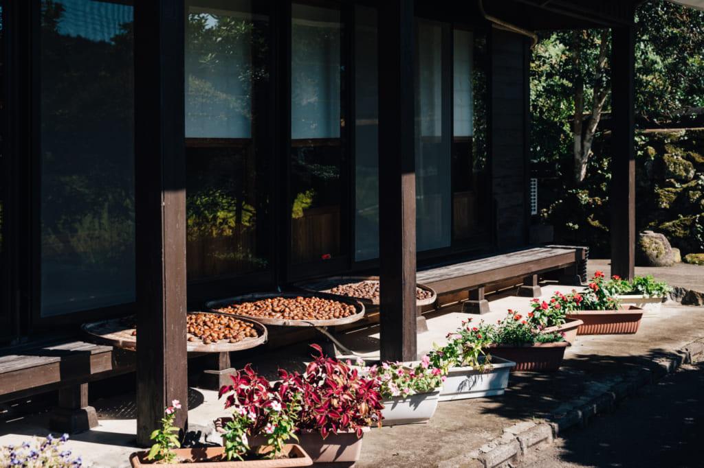 Marrons en train de sécher au soleil dans des paniers plats dans un village rural de Kumamoto