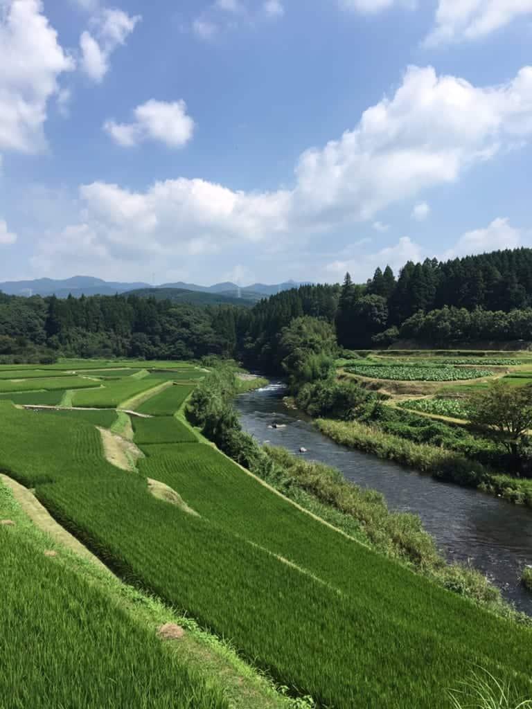 Les champs fertiles de Kikuchi, à Kumamoto