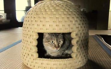 Un chat caché à l'intérieur d'une maison à chats de Sekikawa