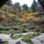 Wie ihr das Herbstlaub in Murakami genießen könnt