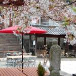 Enmeiji: templo budista y cerezos en flor en Nagasaki