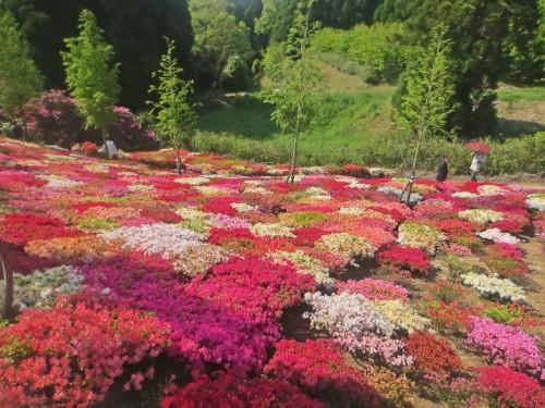 La riqueza visual del parque de las azaleas Matsumoto es ideal para hacer fotografías.