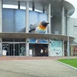 Pingüinos en Nagasaki: ¡interactúe con estas criaturas sin salir de Japón!