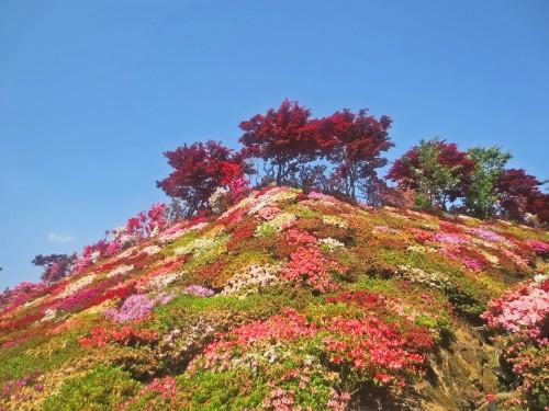 Cerca de la ciudad de Omura, a una hora de camino conduciendo desde la ciudad de Nagasaki, le espera el Parque de las Azaleas Matsumoto.
