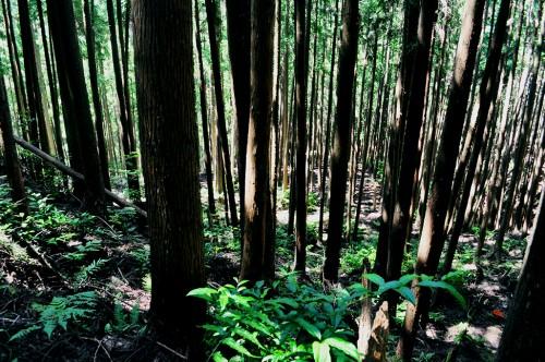 bosques kumanogawa-cho