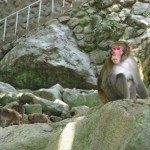 Takasakiyama: cosa de monos