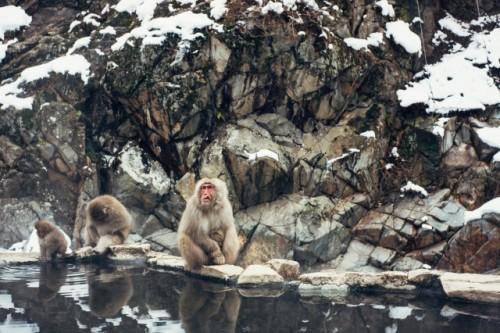 Monos de Jigokudani