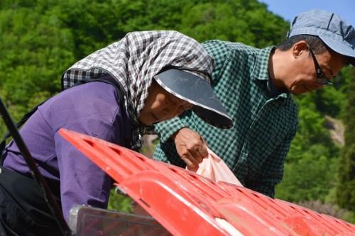 Granjeros cultivando arroz en Takane.