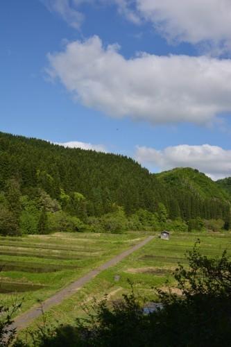 Campos de arroz de Takane.
