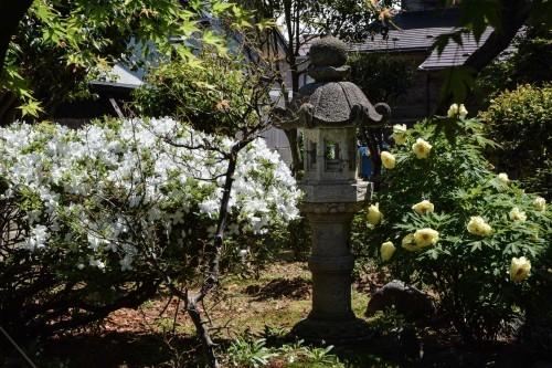 Jardín de la tienda de té Kokono-en de Murakami.