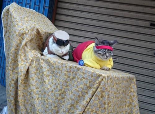Gatos cosplayers en el festival de cosplay de Osaka.