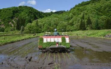 voyapon-planter-riz-murakami-niigata-36