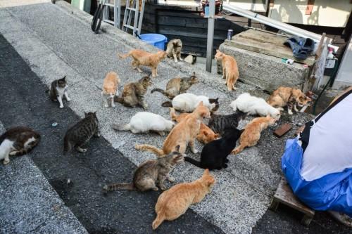 Gatos de Fukashima alimentándose de restos de pescado.