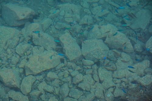 Pececillos en las aguas de Fukashima (Oita).