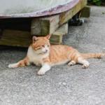 Fukashima: paraíso gatuno en la prefectura de Oita