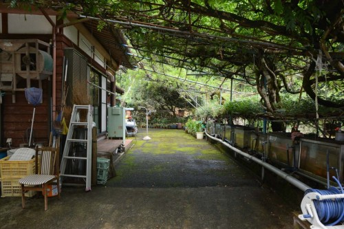 Jardín de glicinias en la granja de Saiki.