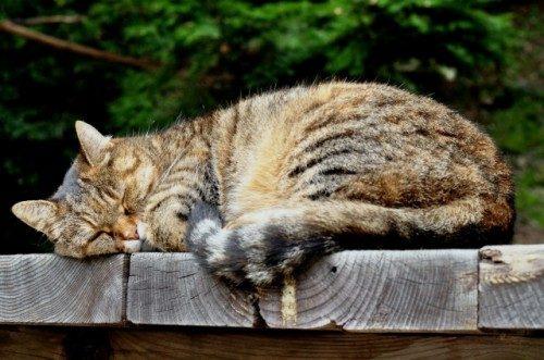 Un neko-chan; gatito en japonés.