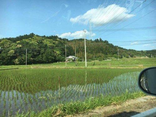 Campos de arroz en Japón.