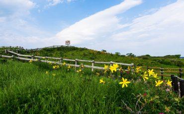 Flores silvestres en Koshimizu Gensei Kaen en el este de Hokkaido