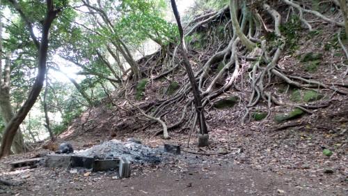 Racines de l'arbre millénaire du temple Monjusenji, dans la péninsule de Kunisaki, préfecture d'Oita sur l'île de Kyushu