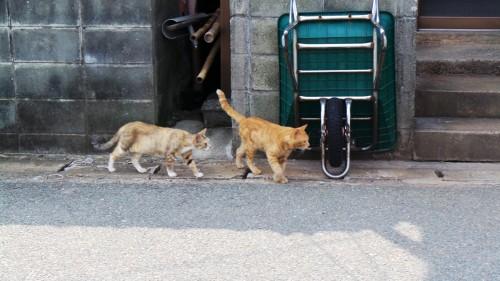 Chats de l'île d'Ainoshima