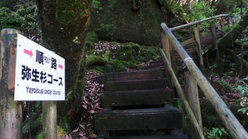 Chemin de randonnée menant aux cèdres millénaires de Yakushima