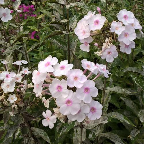 voyapon-french-sapporo-relaxe-jardin-botanique-fleurs