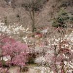 Atami : une ville thermale d'antan dans la préfecture de Shizuoka !
