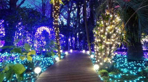 Illuminations d'hiver de l'île d'Enoshima près de Tokyo, jardin Samuel Cocking, Japon.