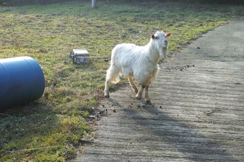 Expérience en Nouhaku à Izumi : animaux de la ferme