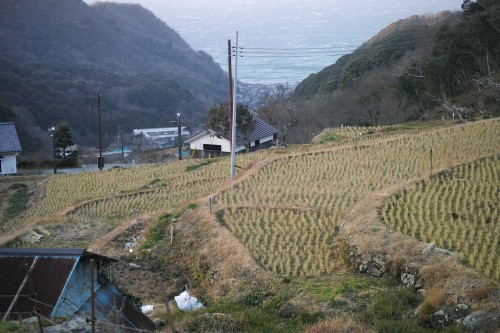 Les rizières en terrasse d'Ishibu, dans la péninsule d'Izu à Shizuoka.