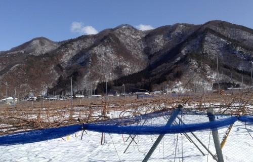 Vigneron dans la ville d'Obuse dans la préfecture de Nagano, Japon.