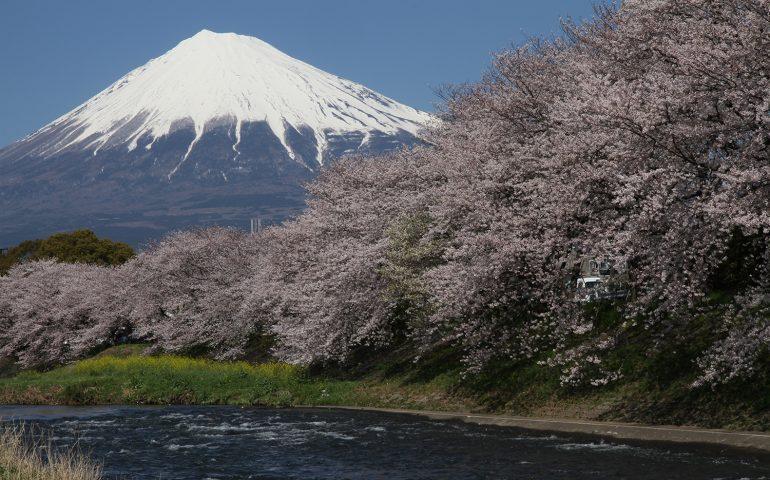 Mont Fuji, Sakura
