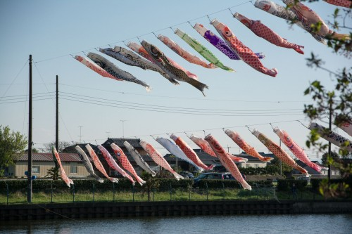 Les carpes koinobori pendant le festival des enfants Kodomo No Hi à Tatebayashi
