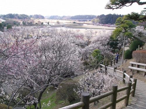 Le jardin Kairaku-en à Mito (Préfecture d'Ibaraki) et des pruniers en fleurs, un des plus beaux jardins japonais du Japon