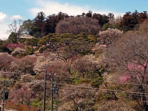 Le jardin Kairaku-en à Mito (Préfecture d'Ibaraki), un des plus beaux jardins japonais du Japon