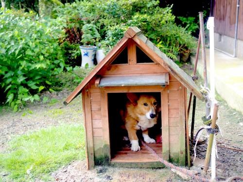 La ferme à Kofuji, sur l'ile de Kysuhu dans la préfecture d'Oita au Japon avec le chien Sumi