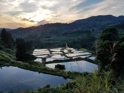 La culture des carpes colorées du village de Yamakoshi au Japon avec les belles rizières