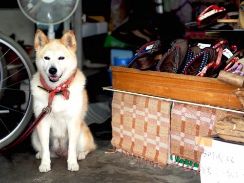Showa no machi, quartier commerçant de Bungotakada, préfecture d'Oita, sur l'île de Kyushu avec le chien shiba yuki, mascotte