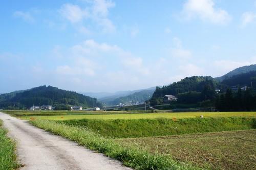 Route de campagne et champs à Kunisaki