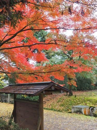 Himi, Mer du Japon, Japon, Temples, Koyo, Automne,