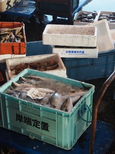 baie de toyama, pêcheurs, himi, poissons, japon, enchères