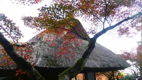 Le toit en chaume de la demeure